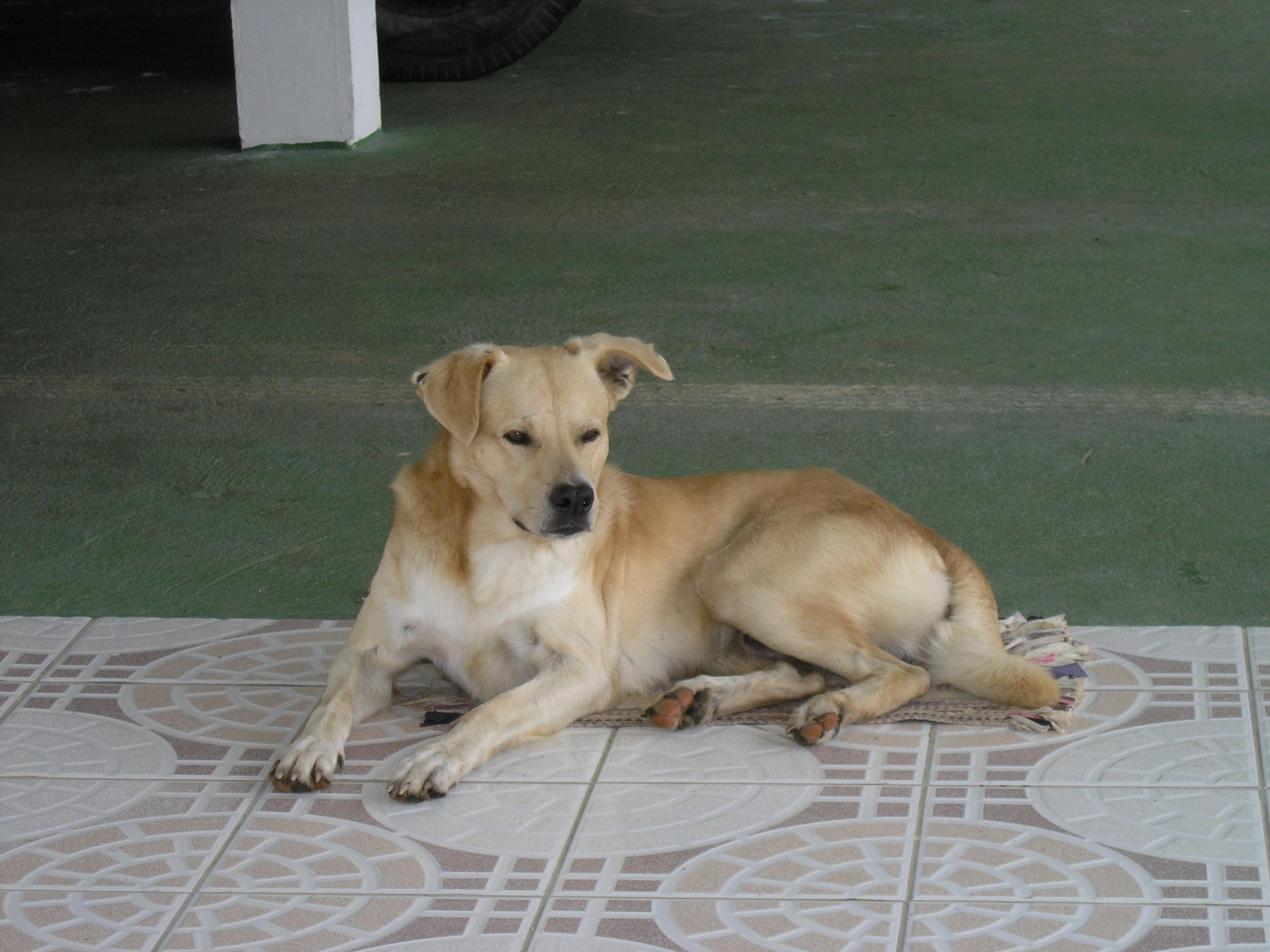 Chien.fr : chien mâle ou chien femelle